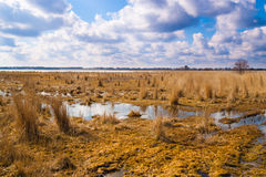 Flooded meadows in early spring. Landscape flooded meadows in early spring in nice sunny day. Ukraine royalty free stock photos