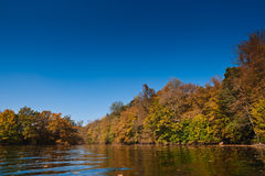 Flooded multicolored autumn forest Stock Image