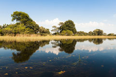 Flooded Okavango Delta Stock Photos