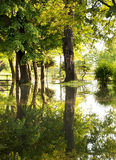 Flooded park Stock Photography