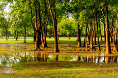 Flooded park with standing water Royalty Free Stock Photo