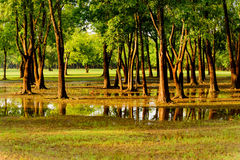 Flooded park with standing water Royalty Free Stock Photos
