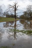 Park area flooded in the UK during winter with single reflected tree. Flooded park in the UK with isolate tree partially submerged under water and nice Royalty Free Stock Photography