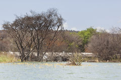 Flooded resort at Lake Baringo in Kenya. Royalty Free Stock Images