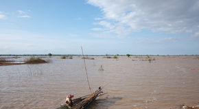 Flooded rice fields in Cambodia Stock Photography