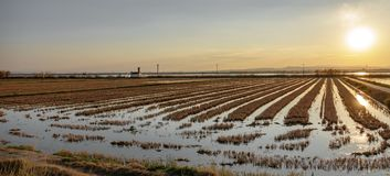 Flooded rice fields at dusk, wide angle Royalty Free Stock Photography