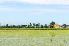 Flooded rice fields, Lomellina (Italy) Royalty Free Stock Images