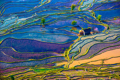 Flooded rice fields in South China Stock Photos