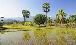 Flooded rice fields Royalty Free Stock Photography