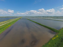Flooded rice paddies. Agronomic methods of growing rice in the f Royalty Free Stock Image