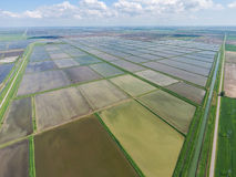 Flooded rice paddies. Agronomic methods of growing rice in the f Royalty Free Stock Photo