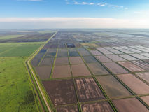 Flooded rice paddies. Agronomic methods of growing rice in the f Royalty Free Stock Photos