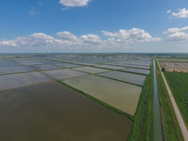 Flooded rice paddies. Agronomic methods of growing rice in the f Stock Image