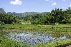 Flooded rice terrace Stock Images