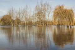 Flooded river bank at Ross-on-Wye Stock Images