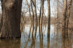Flooded River. From the Grand River during the spring thaw in Kent County Michigan royalty free stock photo