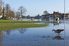 Flooded River. View of Marlow Bridge and flooded Thames river with circa 2014 royalty free stock photos