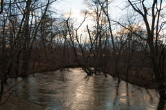 Flooded river in the woods Royalty Free Stock Photography