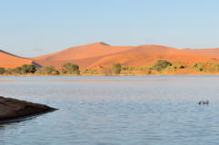 A flooded Sossusvlei in the Namib Desert Royalty Free Stock Photography