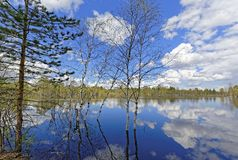 Flood in the taiga of Western Siberia Stock Photography