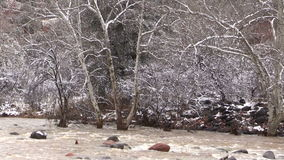 Flooded Stream in Winter stock video footage