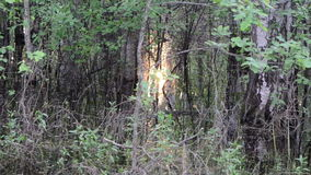 Flooded swamp grove stock video
