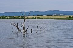 Flooded tree branch protruding from the lake. And blue sky stock photos