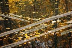 Flooded tree trunks in Autumn season Stock Image