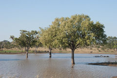 Flooded Trees Royalty Free Stock Image
