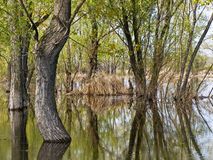 Flooded trees Stock Photo