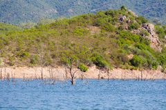 Flooded trees Royalty Free Stock Images