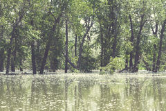 Flooded Trees. Stock Image
