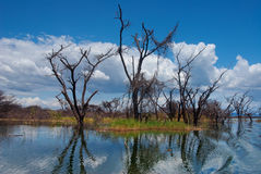 Flooded trees at lake Stock Images