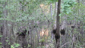 Flooded trees sun reflect stock footage