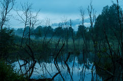 Flooded trees in twilight Stock Photo