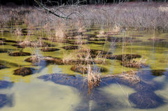Flooded wetlands. At White Memorial in Litchfield Connecticut on a cold winter day stock photos