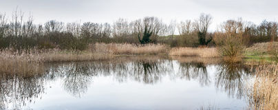 Flooded woodland with pond. Flooded low lying woodland with a pond formed  from floodwater Stock Image