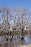 Flooding весны в пригородах Стоковое фото RF