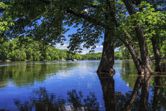 Flooding весны, река Миссисипи стоковые фотографии rf