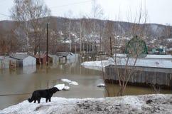 Flooding домов Стоковые Фотографии RF