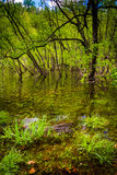 Flooding along the shore of Loch Raven Reservoir in Baltimore, M Stock Image