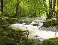 A Flooding Creek in a Lush Forest. A Flooding Creek Rushes Wildly Through a Lush Forest stock photos