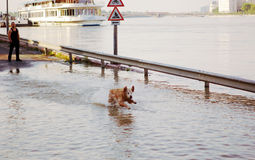 Flooding Danube in Budapest Royalty Free Stock Images