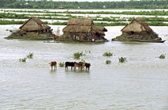 Flooding in the delta Bangladesh, climate changes Royalty Free Stock Photos