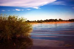 Flooding. Don River Filling, in the Rostov Region, Russia. The bush is a lush, deciduous tree in the water after a flood, in sprin. G and summer. Pink shade of royalty free stock photos
