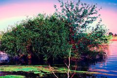 Flooding. Don River Filling, in the Rostov Region, Russia. The bush is a lush, deciduous tree in the water after a flood, in sprin. G and summer. Pink shade of royalty free stock photography