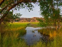 Flooding the Field. Flooding a field in the Horsethief Canyon State Wildlife Area near Fruita, Colorado royalty free stock photography