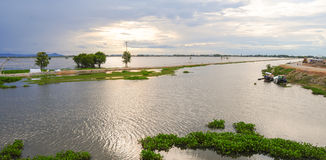 Flooding field in Mekong Delta Stock Photography
