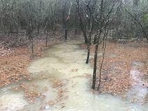 Flooding in the forest. Trails caused by excessive rain stock images