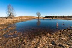 Flooding in latvia Royalty Free Stock Photos